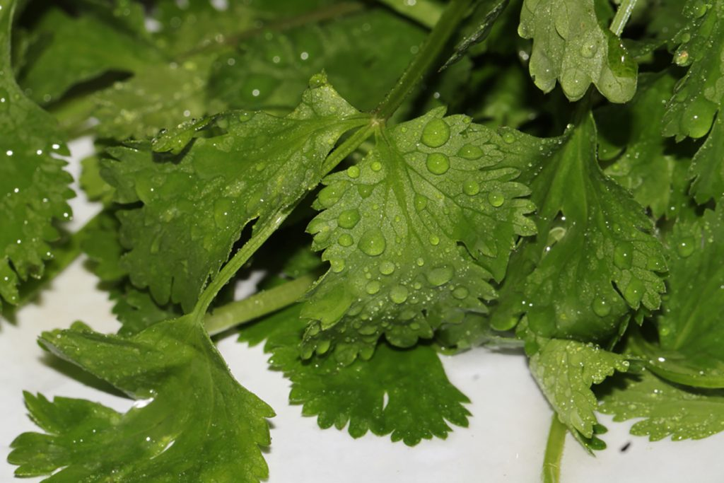 Best Rejuvenating Anti-Aging Herbs, Spices, And Flavorings For Women : PARSLEY