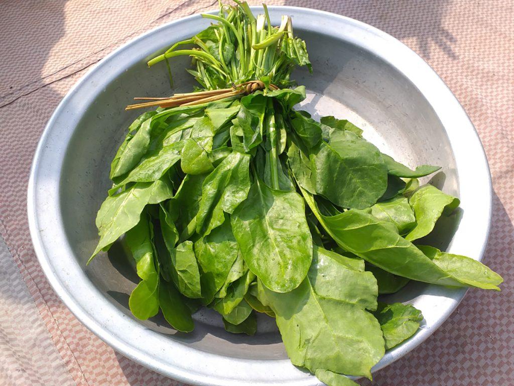 Best Rejuvenating Anti-Aging Veggies For Women : SPINACH